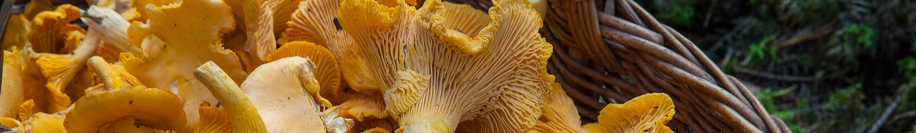 Where and How to Pick Mushrooms - Vancouver Mycological Society