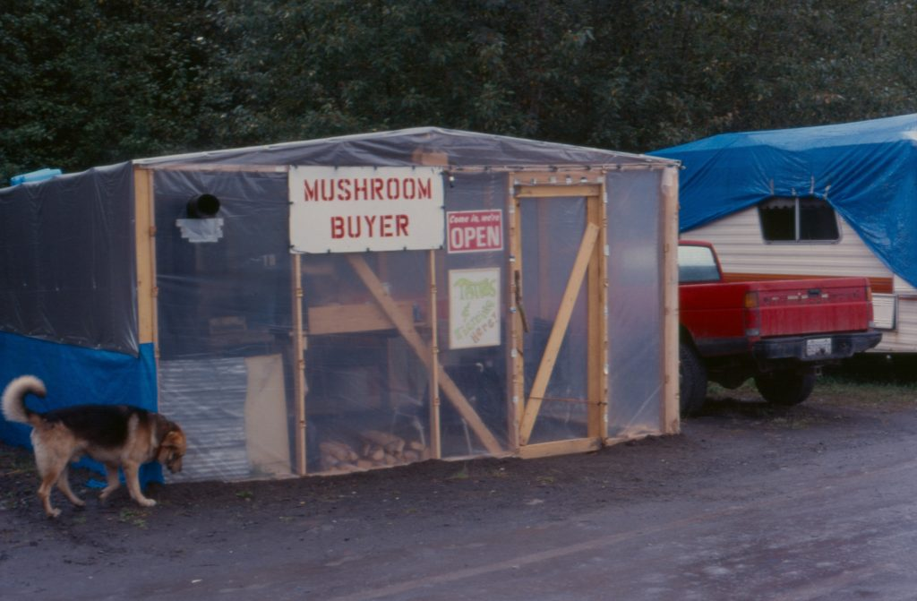 Pine mushroom buying station Cranberry Junction Kitimat