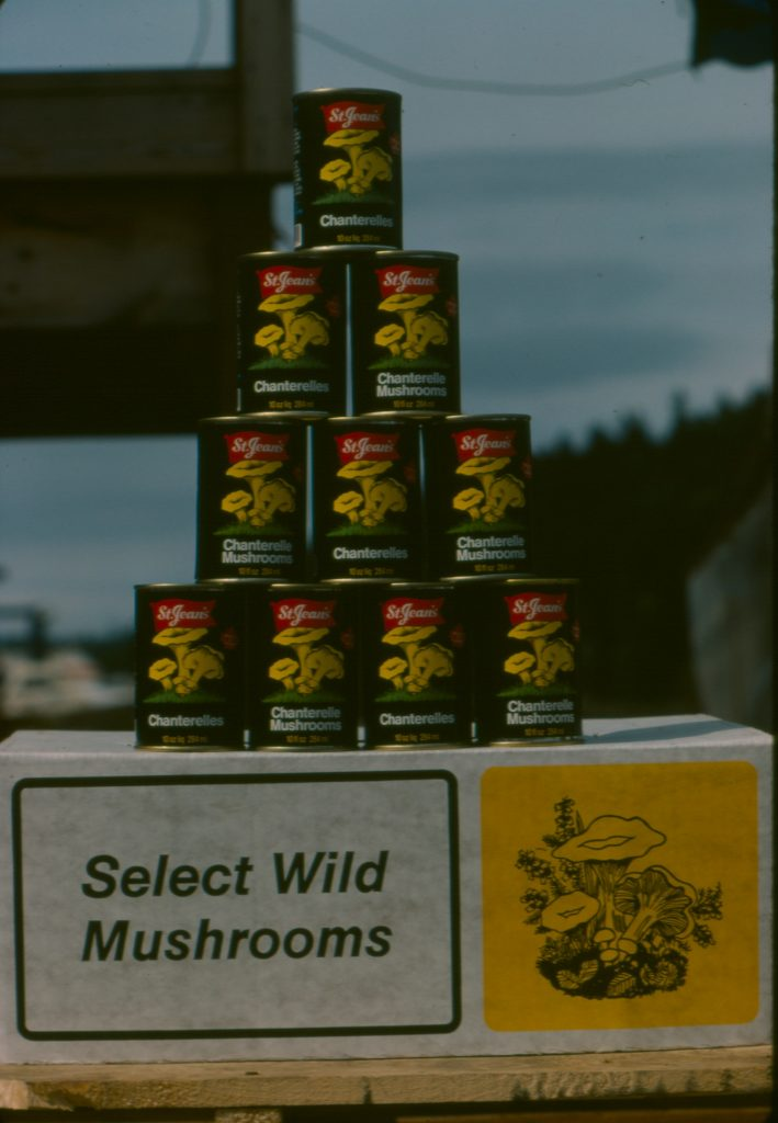 BC canned chanterelles for export to Germany. St. Jean's cannery, Nanaimo 1985 (photo P. Kroeger)